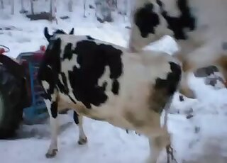 Bull Videos / amateur animal porn / Most popular Page 1